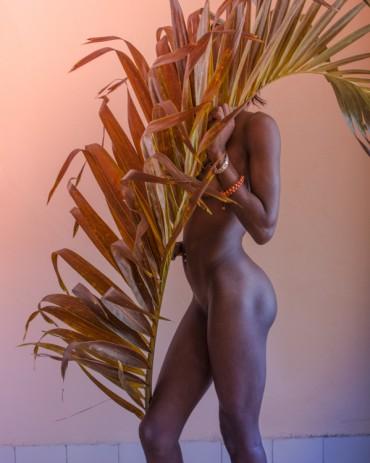 Palm leaf #3