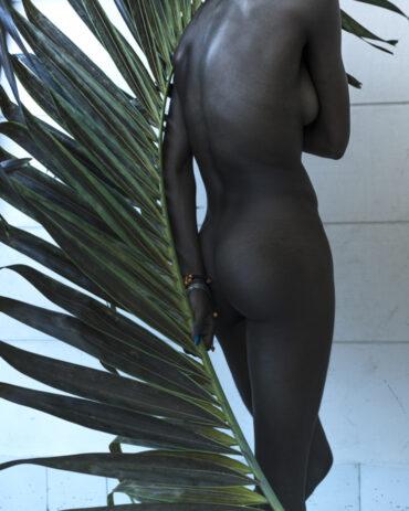 Palm leaf #2