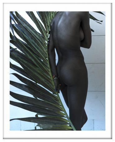 Palm leaf # 01