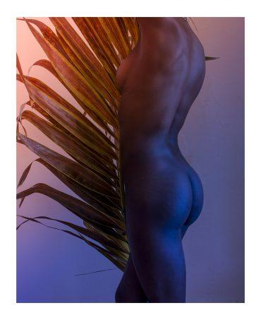 Palm leaf # 02