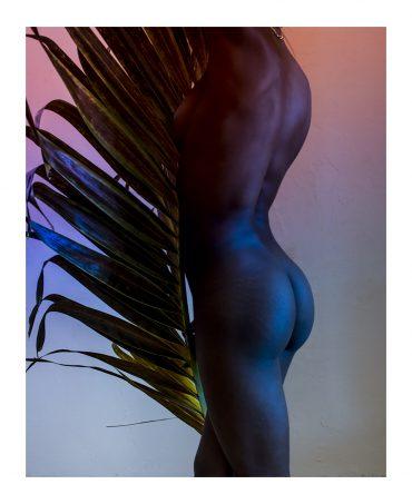 Palm leaf # 03